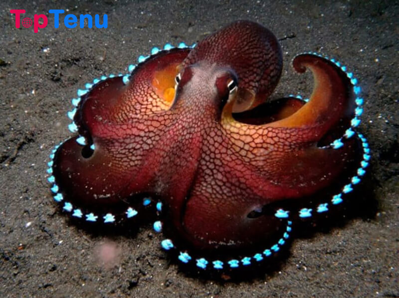 Bioluminescent Octopus