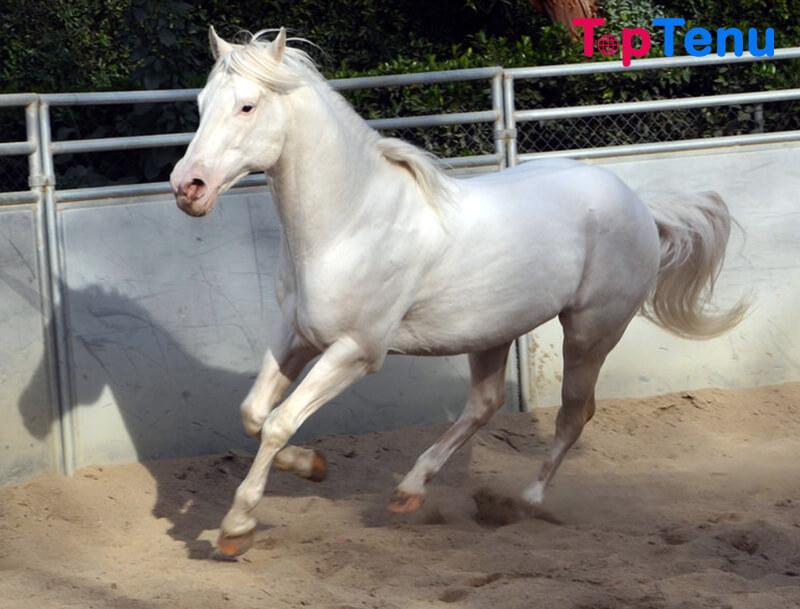 Camarillo White Horse