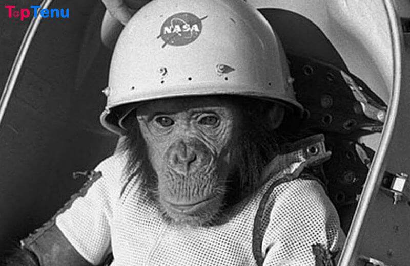 Ham the Chimp