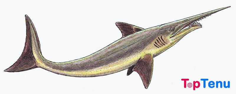 Scapanorhuynchus