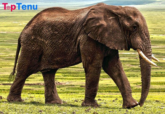 Elephant Most Intelligent Animals