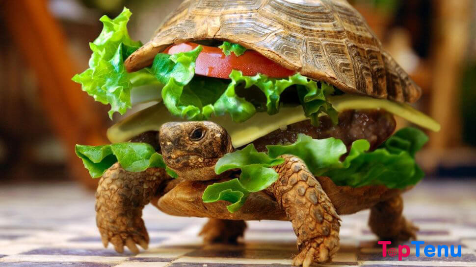Turtle disguised as hamburger
