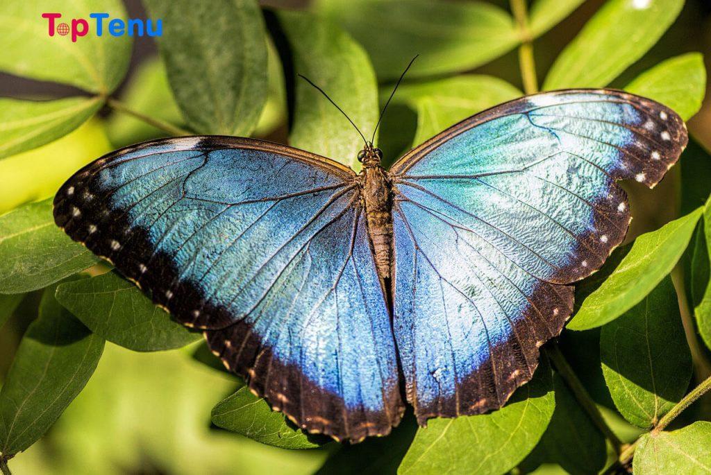 Most Beautiful Butterflies